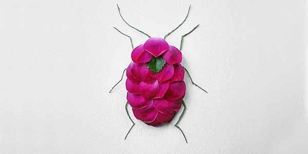حشرات زیبایی که از گلها ساخته شدهاند